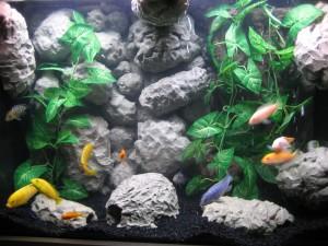 Aquarium Desktop background Image