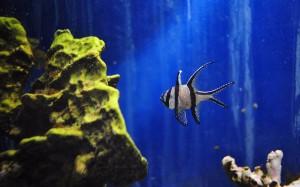 Aquarium Museum background Photo
