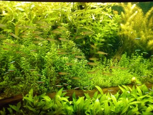 Aquarium background Green Aqua Plants Image