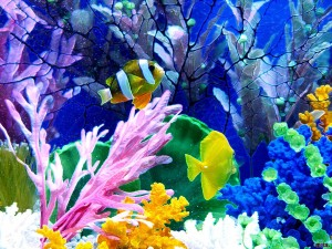 Image of Aquarium background