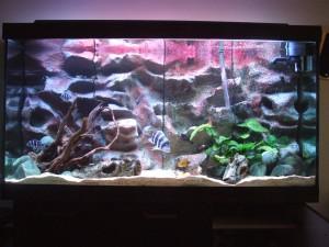 Image of Aquarium background