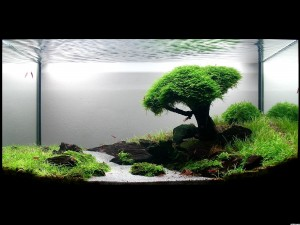 Photo of Aquarium background