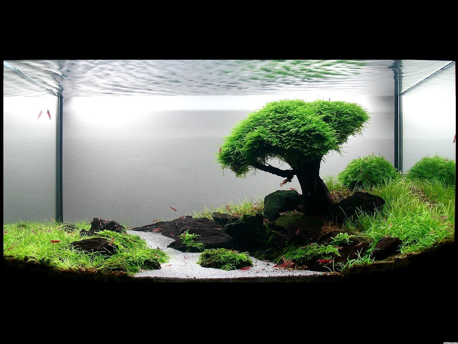 33 Attractive Aquarium Background Technosamrat