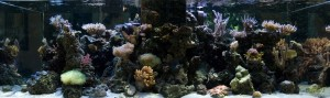 Picture of Aquarium background