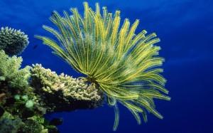 Aquarium background Sea anemones Photo