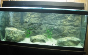 Aquarium background Wall Image