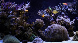 Image of Aquarium background Wallpaper