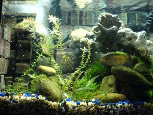 Picture of Aquarium background Wallpaper