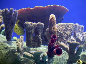 Aquarium background coral Image