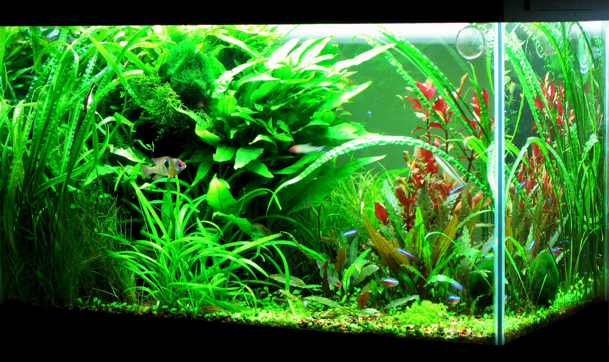 33 Attractive Aquarium Background Technosamrat