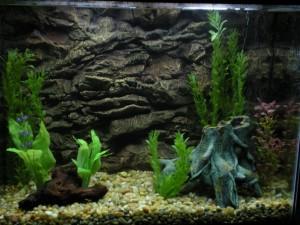 Aquarium background wallpaper Picture