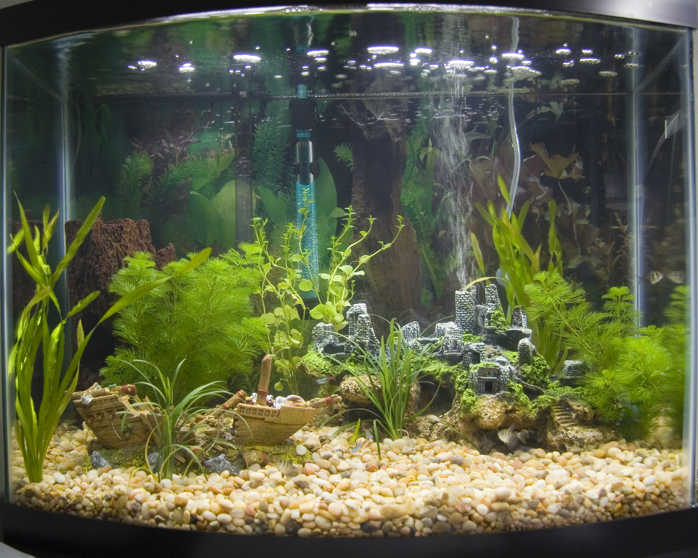 Small fish tank maintenance backgrounds 2017 fish tank for Fish aquarium background