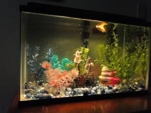 Aquarium background Photo