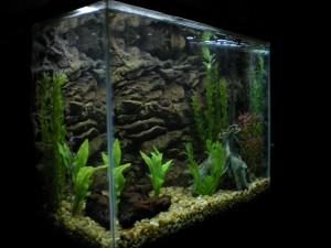 Aquarium background Picture