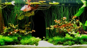 Aquarium background Image