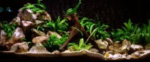 Panorama Aquarium Wallpaper Photo