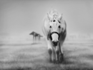 Black and White Horse Wallpaper Image