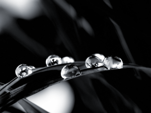 Black and White Raindrops Wallpaper Photo