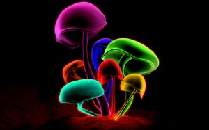 Colorful Mushrooms Desktop Background Photo