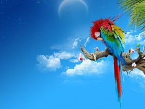 Colorful Parrot Desktop Wallpaper Image