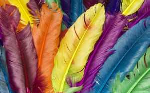 Colourful Feathers Wallpaper Picture