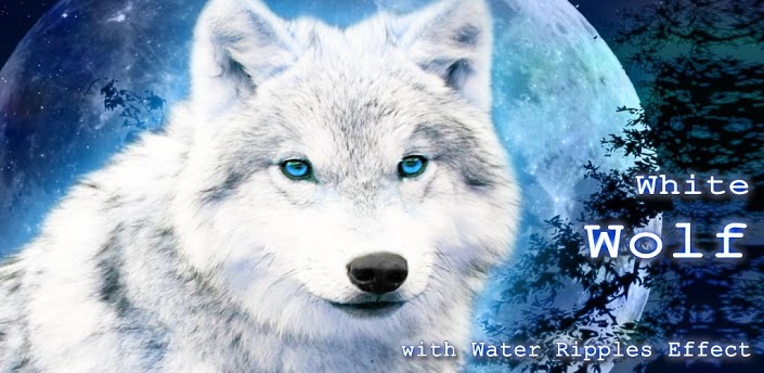 Magic White Wolf Hd Desktop Wallpaper High Definition Mobile Picture