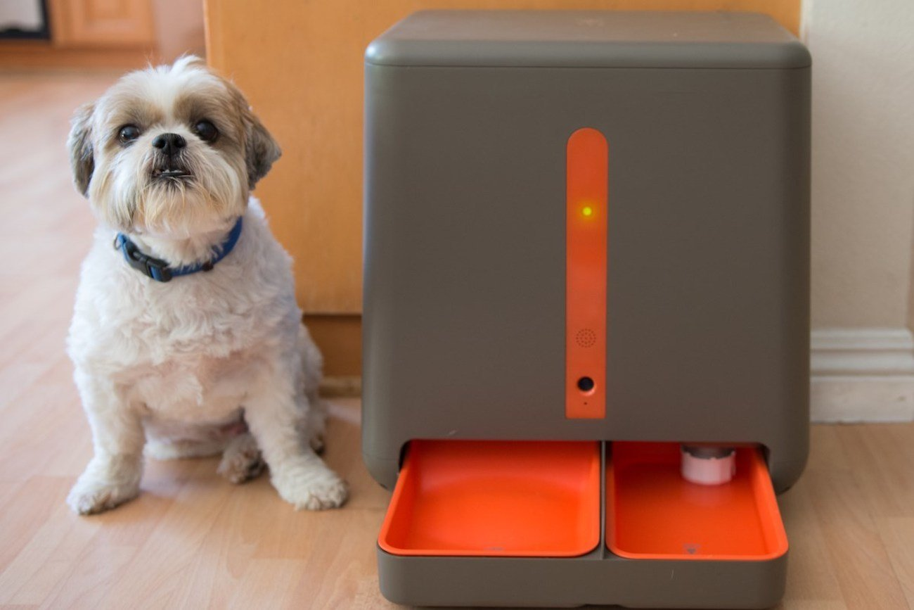 6 Cool Tech Gadgets For Your Dog Technosamrat